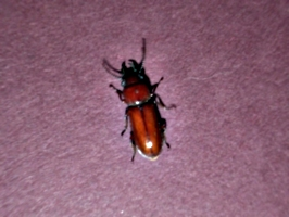 [picture: Bug 11]