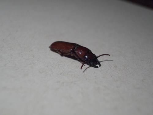 [Picture: Bug 3]
