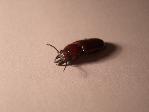 [Picture: Bug 5]