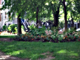 [picture: Flowers in the park]