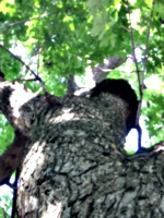 [picture: Tree trunk looking up]