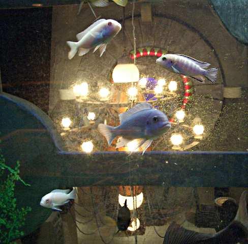 [Picture: Hotel aquarium]