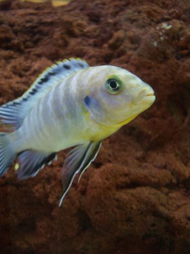 [Picture: Coloured fish]