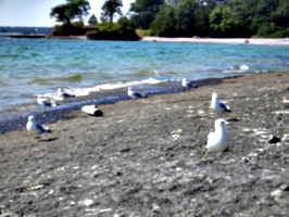 [picture: Seagull Party 3]