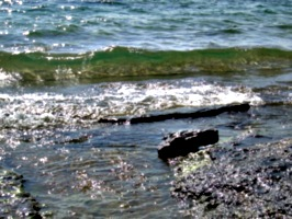 [picture: Water on rocky shore 8]