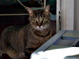 [picture: Cat]