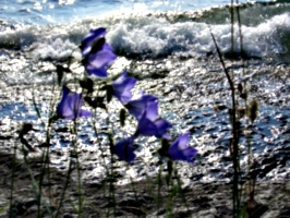 [picture: Purple flowers 3]