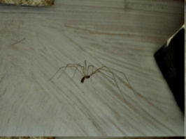[picture: Spider]