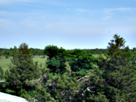 [picture: View from the barn roof 3]