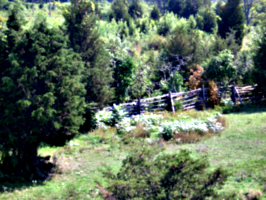 [picture: Paddock fence 2]