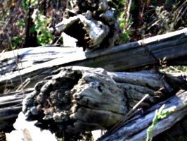 [picture: Old wood]
