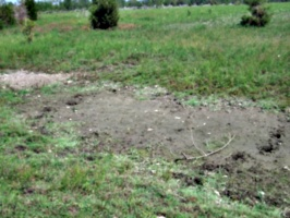 [picture: Muddy patch]