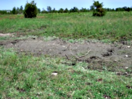 [picture: Muddy patch 2]