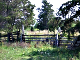 [picture: Fence 2]