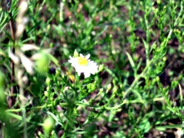 [picture: Daisy]