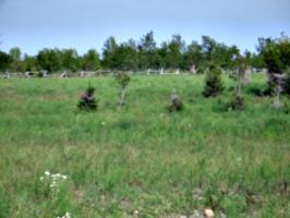 [picture: Grassy field]