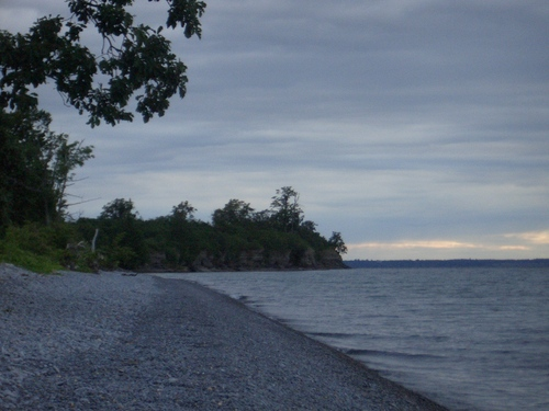 [Picture: Tree by beach 2]