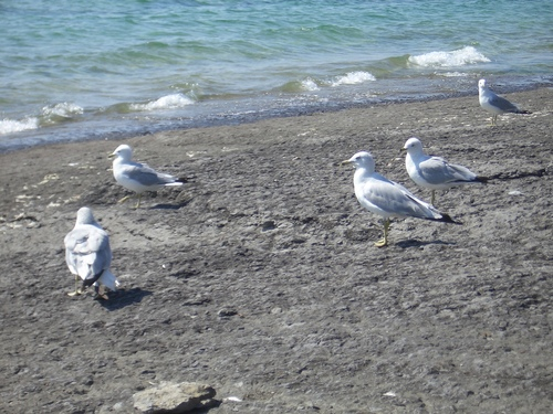 [Picture: Seagull Party]