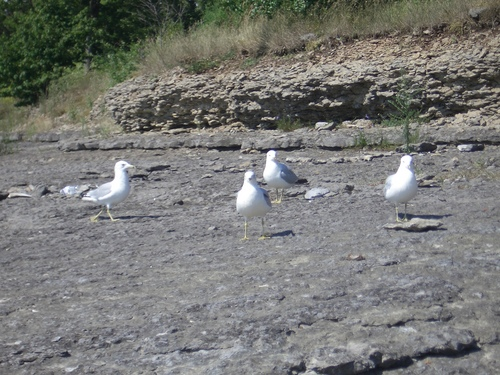 [Picture: Seagull Party 6]