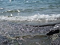 [Picture: Water on rocky shore 5]
