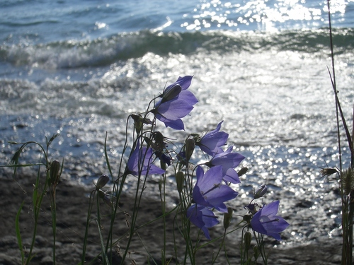 [Picture: Purple flowers]