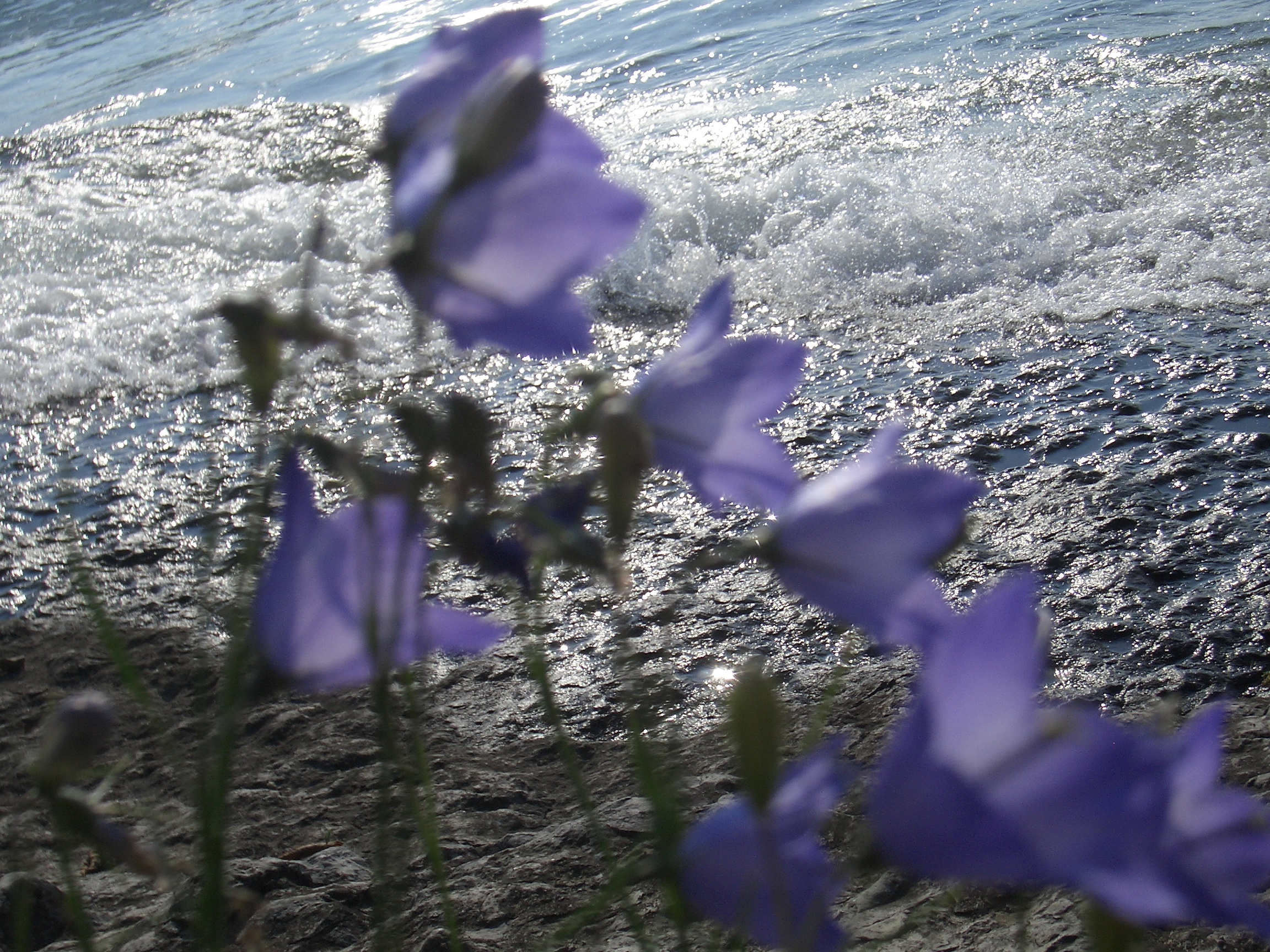 [Picture: Purple flowers 2]
