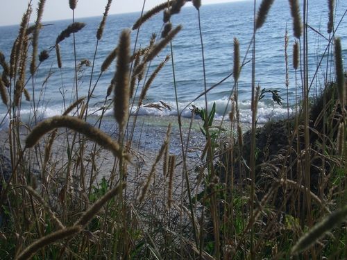 [Picture: grass in front of beach]