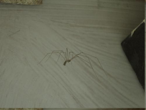 [Picture: Spider]