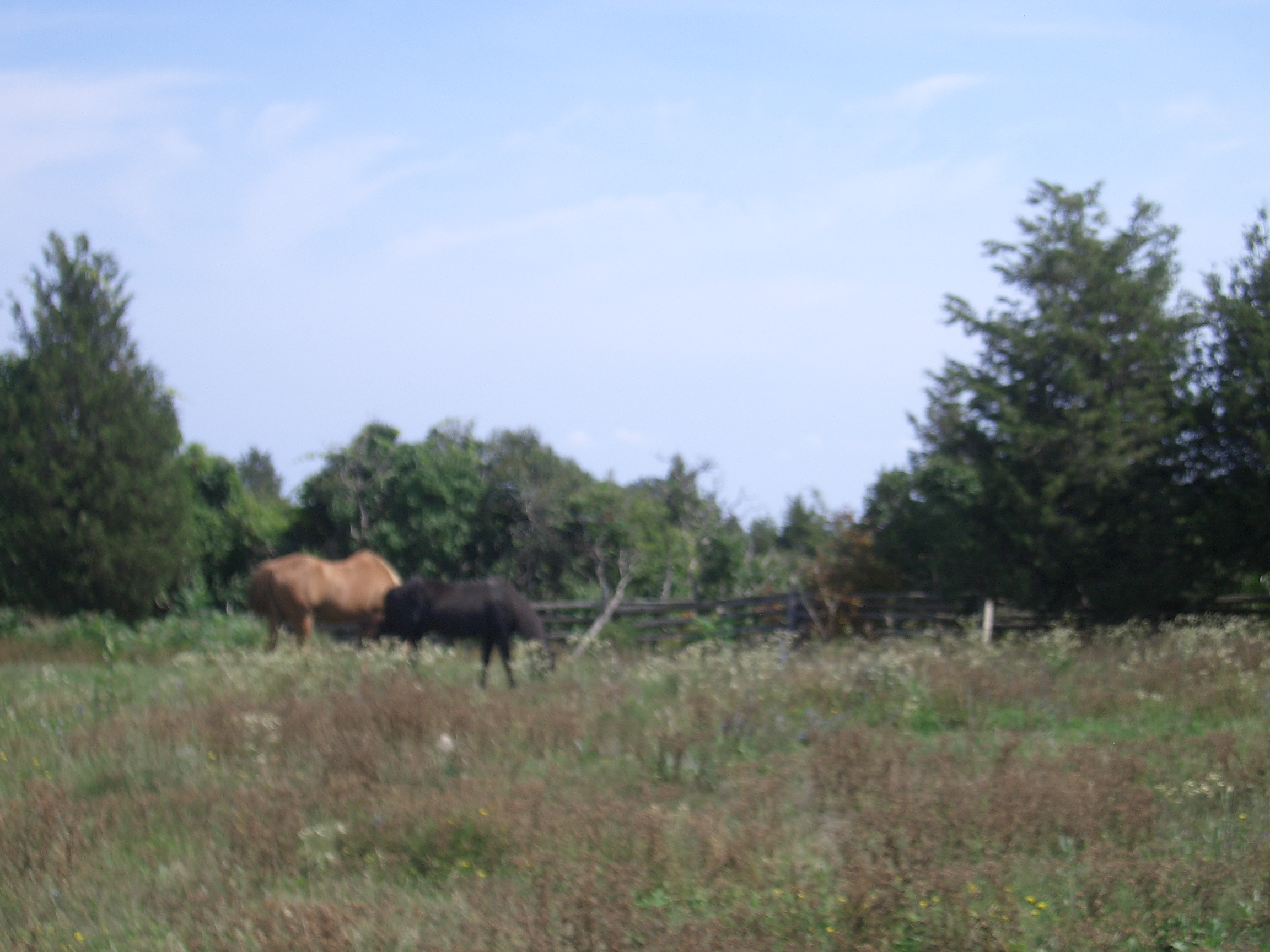[Picture: Horses]