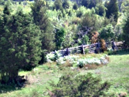 [Picture: Paddock fence]