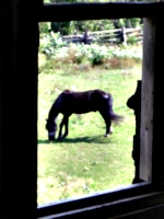 [Picture: Horse through the window]