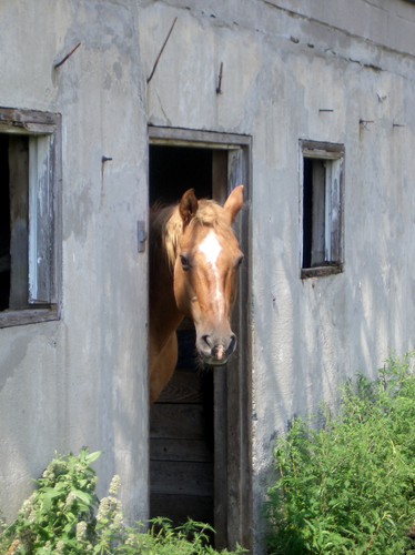 [Picture: Horse head 2]