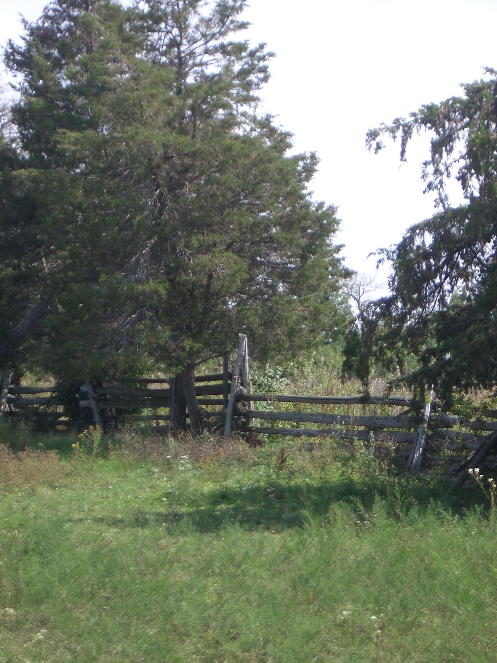 [Picture: Fence]