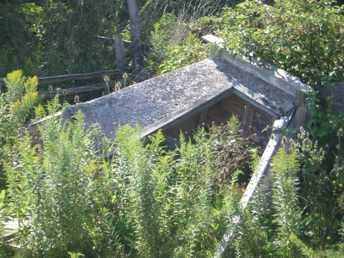 [Picture: overgrown structure]