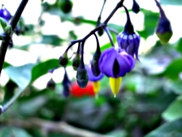 [picture: Purple and yellow flowers]