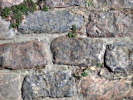[picture: Cobblestones]