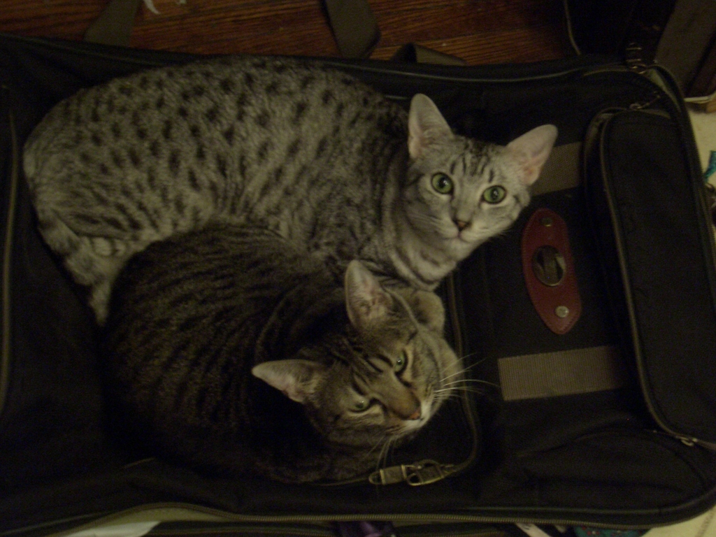 [Picture: Cats on suitcase]
