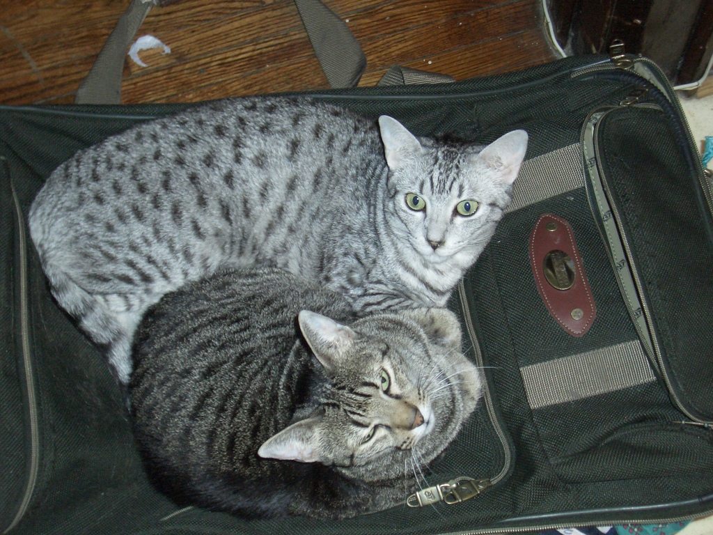 [Picture: Cats on suitcase 3]