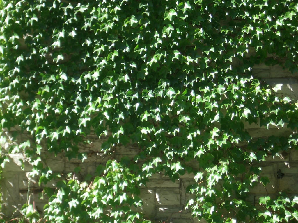 [Picture: Wall creeper 3]