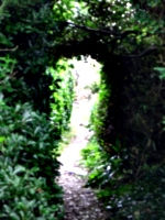 [picture: Secret Garden]