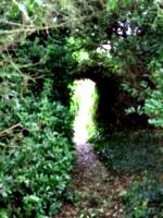 [picture: Secret Garden 2]