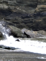 [picture: Tide spray]