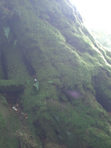 [Picture: Moss-covered tree roots]