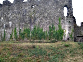 [picture: Restormel Castle 43: Castle wall with creeper]