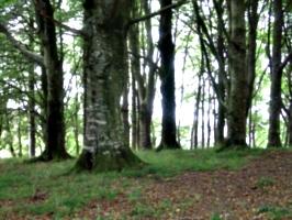 [picture: Restormel Castle 44: The enchanted forest]
