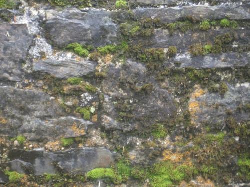[Picture: Restormel Castle 10: Wall texture 2]