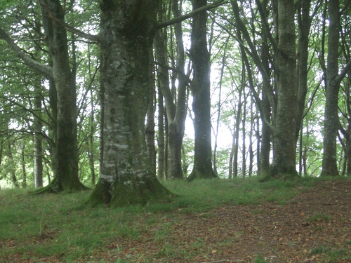 [Picture: Restormel Castle 44: The enchanted forest]