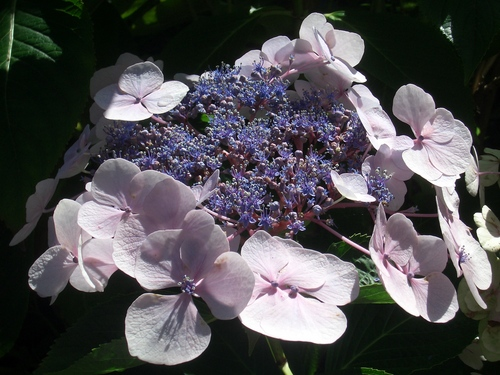 [Picture: pink and purple flowers]