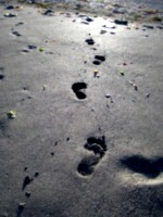 [picture: Bare footprints in wet sand]