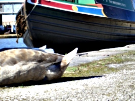 [picture: The back end of a duck and the front end of a boat]
